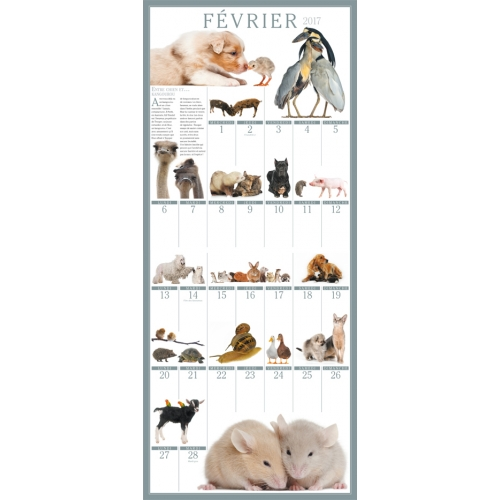 Big wall calendar 365 friends forever 2017