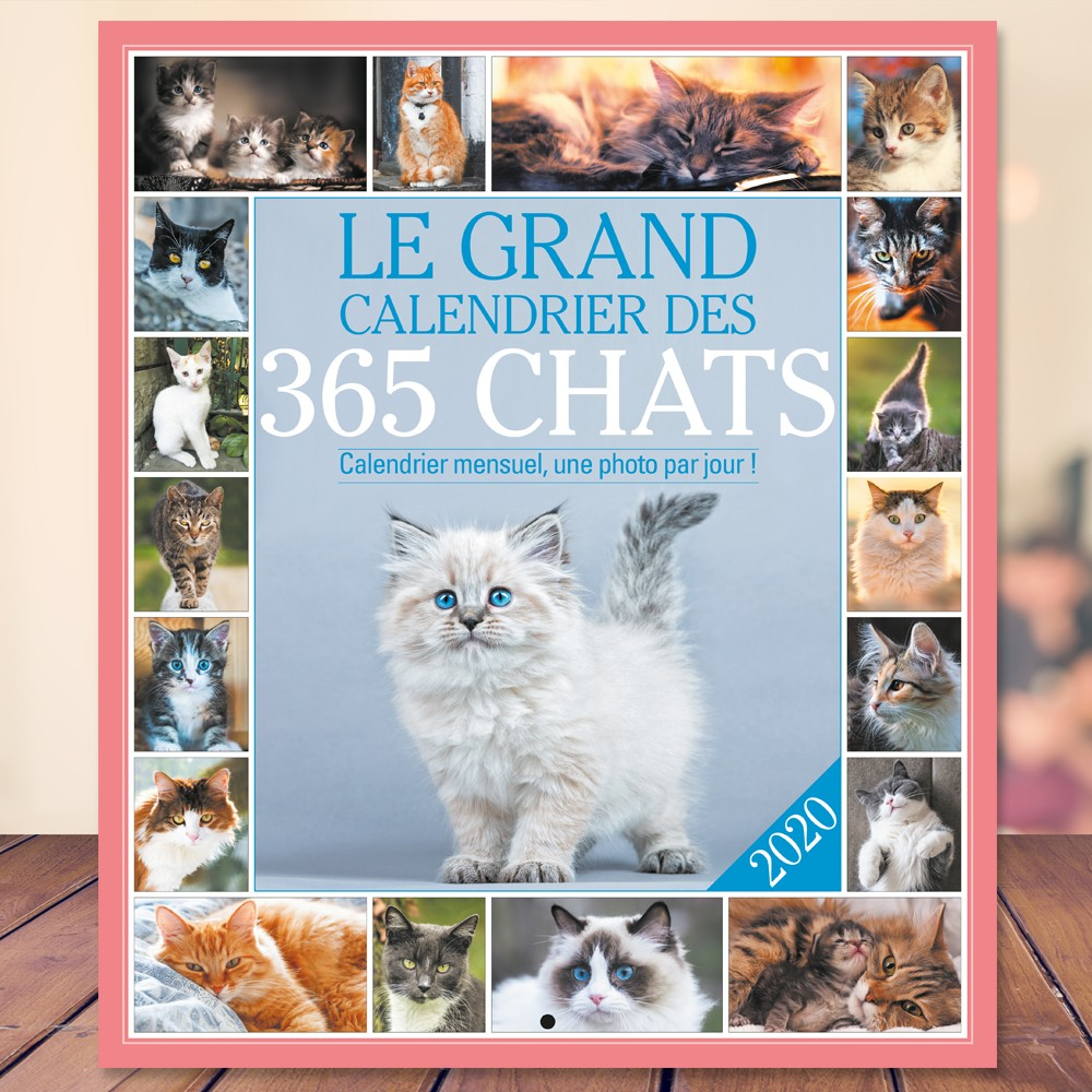 Calendrier Animaux.Le Grand Calendrier Des 365 Chats 2020