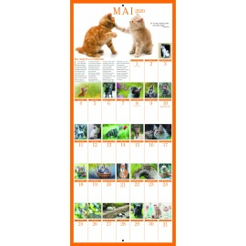 Big wall calendar 365 cats 2020