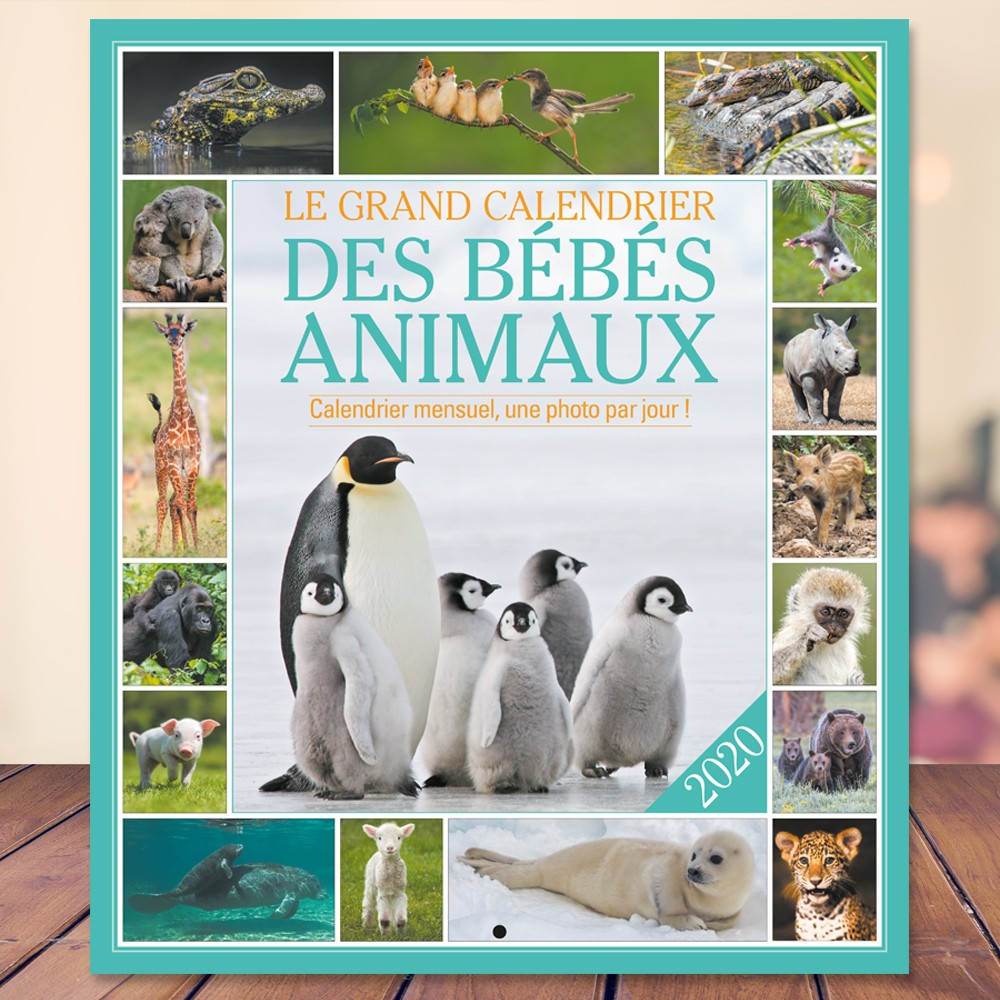 Calendrier Bebe.Le Grand Calendrier Des Bebes Animaux 2020
