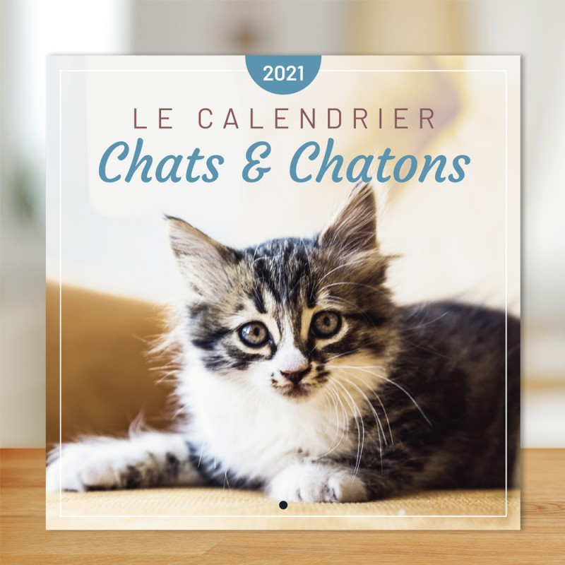 Cats And Kittens Calendar 2021 Editions 365